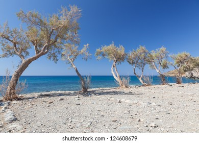 The beach near Preveli Beach. Greece. Crete. Beach, small trees and blue sky.