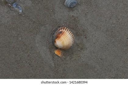 At the Beach - North Sea