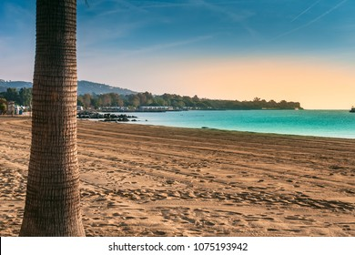 beach on the Mediterranean, bay of sain tropez, palm on the background of the sea and the beach and sky