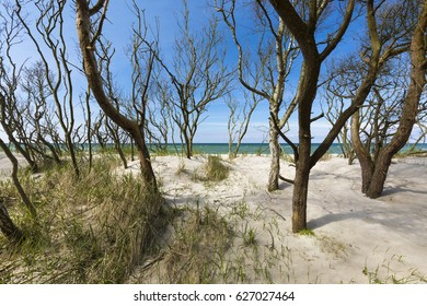 Beach on the southern shore of the Baltic Sea in the German state of Pomerania