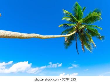 Beach Overhanging Paradise