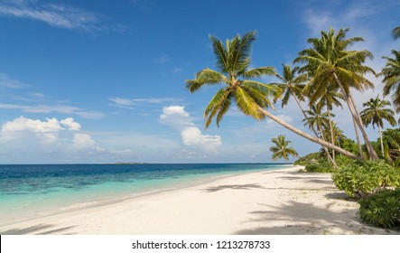 Beach with palm atoll island Maldives.