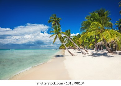 Beach with palm and a sailing boat in the turquoise sea on  Saona Paradise Island
