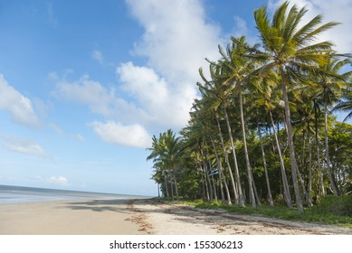 Beach with palm tree jungle at seafront. Tropical Port Douglas, Queensland, Australia