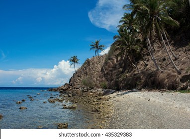 The beach with palm trees, Apo island, Philippines. Tropical island beach in summer sun. Vacation at the tropical island. Exotic place for holiday. Tropical beach with palms image. Empty sand beach