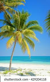 Beach with palm trees, caribbean sea