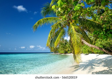 Beach with Palm Trees on the Maldives