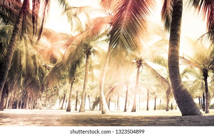 Beach palm trees sand bright sunlight background vintage style