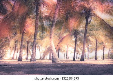 Beach palm trees sand sunlight island colorful background artistic vintage style