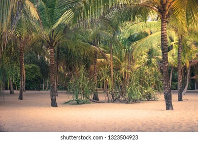 Beach palm trees scenery sunset island background vintage style