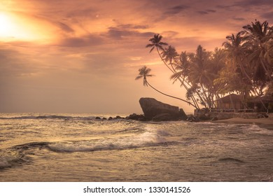 Beach palm trees sunset sea waves orange coastline landscape sun dramatic sky tropical island background