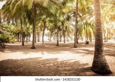 Beach palm trees tropical vintage background island palm grove with shadow landscape
