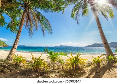 Beach with palm trees and white sand