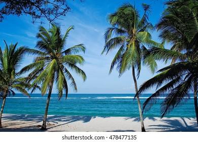 Beach with palms in Kenya, Tiwi beach