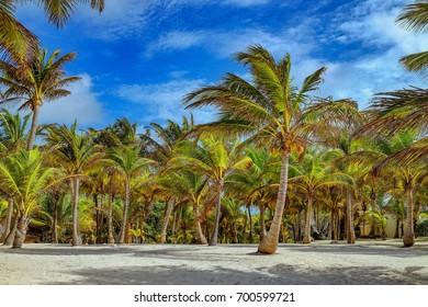beach with palms under a blue sky