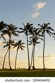 In a beach park vacationers sit in sun loungers under tall palm trees and watch the sunset and the evening light - Location: Hawaii