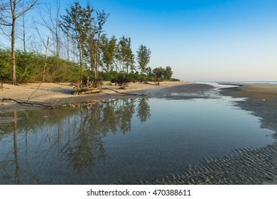 the beach with pine and reflection