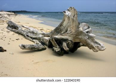beach rock stone and tree in  republica dominicana