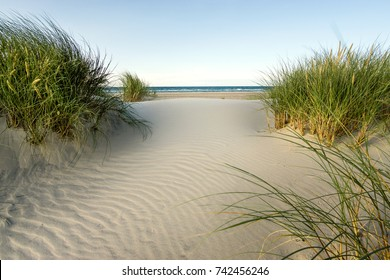 Beach with sand dunes and marram grass in soft evening sunset light.