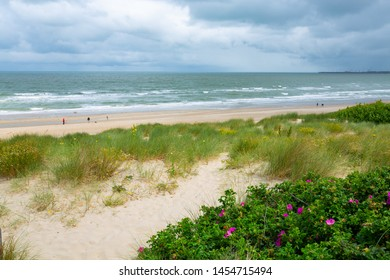 Beach and sand dunes near Blankenberge in Flanders, Belgium