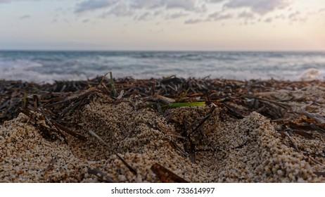 Beach sand, moss and sea