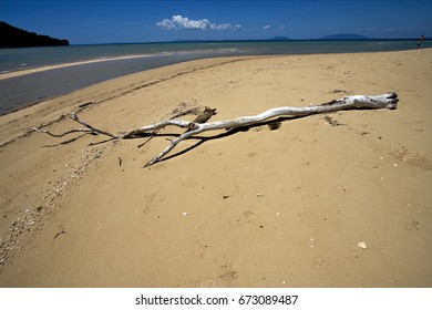 beach and sand  in nosy be  madagascar ,lowtide and a tree