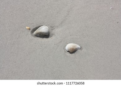 Beach sand seashells water texture background