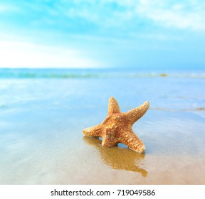 Beach Sand Shell