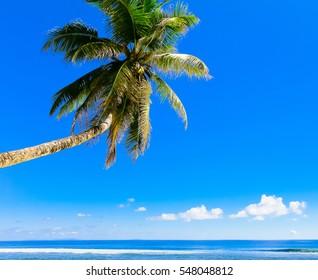 Beach Scene Dream