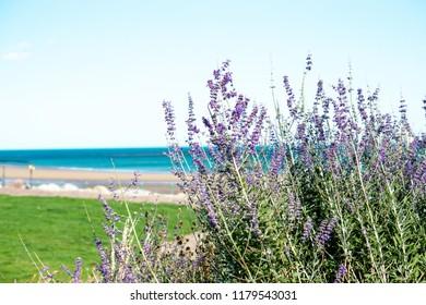 beach scene at Seaburn beach in Sunderland