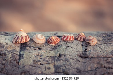 Beach sea shells travel tropical vintage background