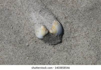 At the Beach - Seashell