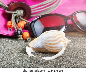 Beach seashell with sunglasses and hat in background with sunlight effect