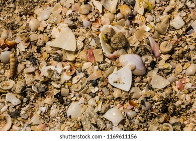 beach of shells