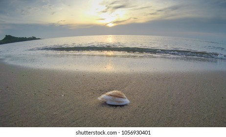 Beach shells in the morning