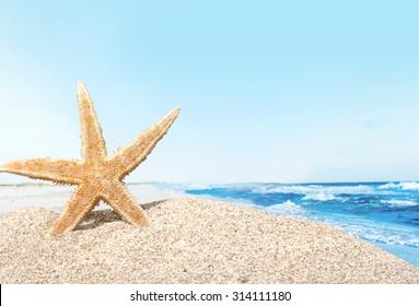 Beach starfish.