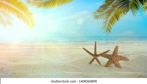 Beach summer background. Summer holidays wih sand, star fish and palm leaves. Sandy beach