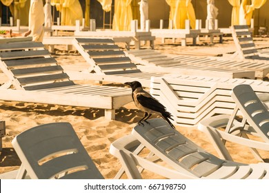 Beach sun loungers stand on the sand, for summer warm morning rest.