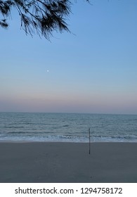 Beach at sunset  with pine tree leaf