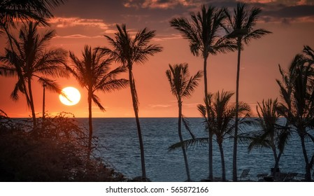 Beach sunset with red sky and palm tree silhouettes