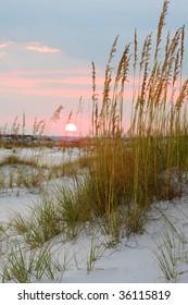 Beach Sunset Through the Sea Oates