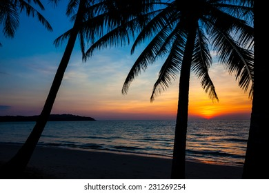 beach in sunset time. palm trees silhouette on sunset tropical beach