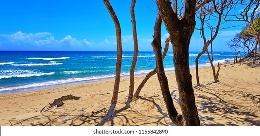 Beach surrounded by trees