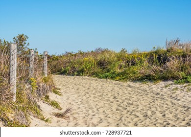 A beach trail surrounded by wildflowers and natural vegetation in early Fall along the NJ coastline.