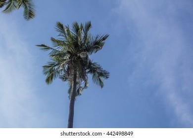 Beach and tree