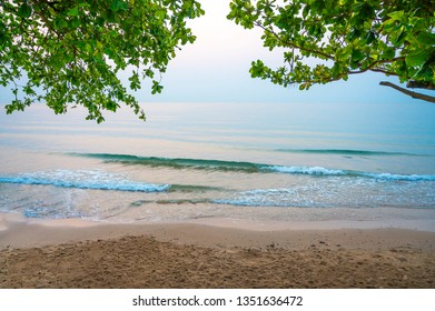 The beach with the tree branch