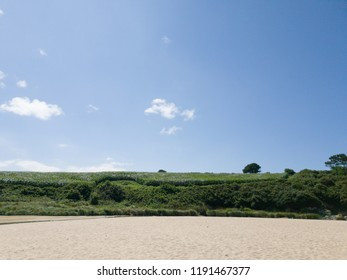 beach with trees in the horizon