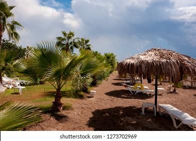 Beach in Turkey. palm trees and straw umbrellas