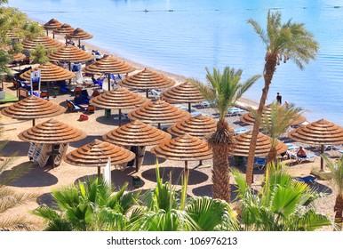 Beach umbrellas and palm trees on sandy beach