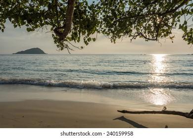 Beach under trees